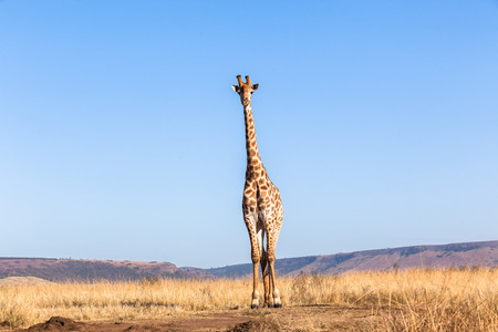 rugged terrain: Wildlife animals in their habit wilderness reserves in herds over the rugged terrain. Stock Photo