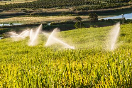 sprinklers: Sugarcane crops with irragation sprinklers over the scenic landscape