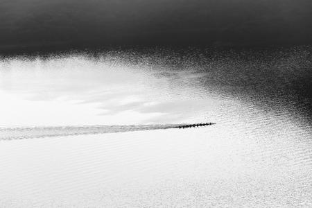 birdseye: Canoe Paddlers race across waters silhouetted birdseye air landscape in black and white vintage