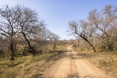 wildlife reserve: Dirt road route through dry trees in wilderness wildlife reserve landscape,