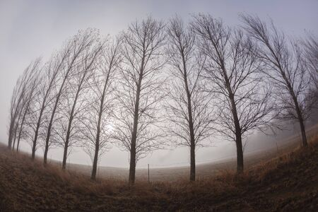 fisheye: Trees line in cloud mist curved fish-eye lens abstract concepts.