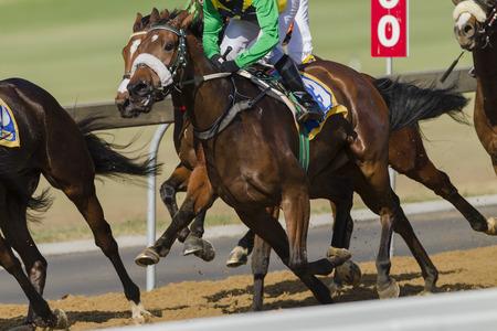 競馬場の競馬騎手の馬のクローズ アップのアクション