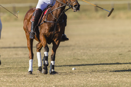 unidentified: Polo equestrian rider horse pony game action closeup abstract unidentified. Stock Photo