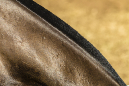 body grooming: Horse pony grooming neck body cover closeup abstract animal detail.