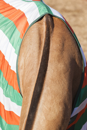 hair cover: Horse pony grooming neck hair mange body cover closeup abstract animal detail.