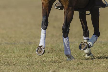 Pferd Pony Bein Schuhe Nahaufnahme abstrakte Tier Detail auf Feld.