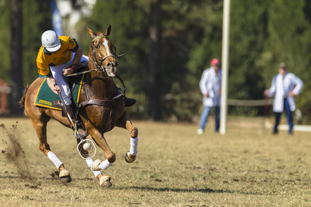 worldcup: Polocrosse sport world-cup Australias Will Weston play action at Shongweni equestrian fields