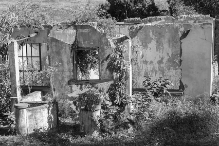 rural countryside: House ruins overgrown destroyed building in rural countryside in vintage black and white.