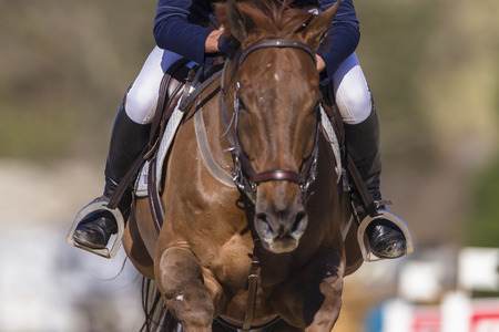 Rider horse action closeup at national equestrian show jumping Championship at Shongweni equestrian venue outside Durban