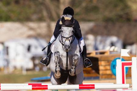 Azione pilota di cavallo del primo piano a livello nazionale equestre Campionato salto ostacoli Editoriali