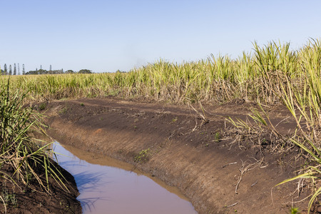 rural countryside: Farm water canal alongside sugarcane crops in rural countryside. Stock Photo