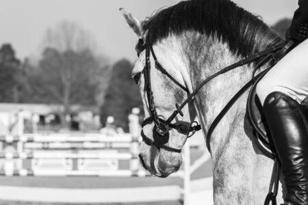 head close up: Horse head close up