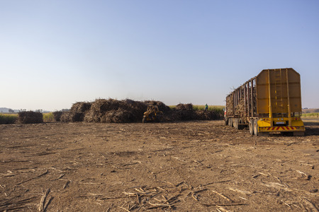 truck crops: Agriculture tractor loading sugarcane crops into truck