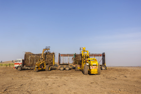 truck crops: Agriculture tractor hydraulic arm lifter loading sugarcane crops into truck