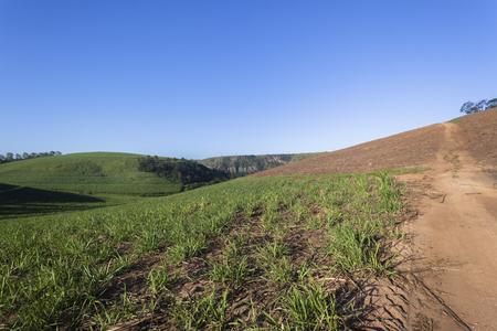 ing: Farmland hillside crops plowed fields landscape with trees on scenic summer landscape.