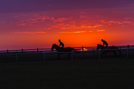 silhouetted: Race horses riders training dawn sunrise silhouetted track. Stock Photo