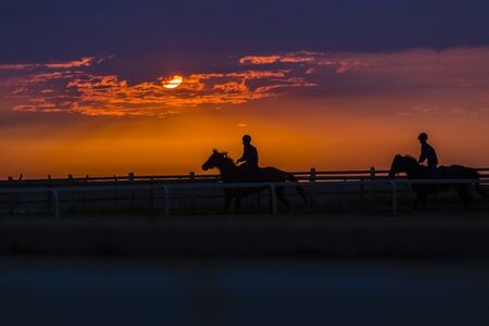 silhouetted: Race horses riders training dawn silhouetted track.