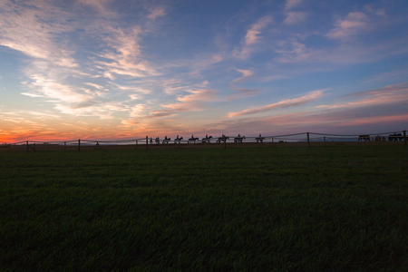 silhouetted: Race horses riders morning training silhouetted sunrise landscape . Stock Photo