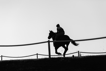 silhouetted: Race horse rider training track action morning silhouetted landscape.
