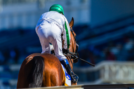 Race horse and jockey down to starting gates rear photo. Stock Photo - 63232689