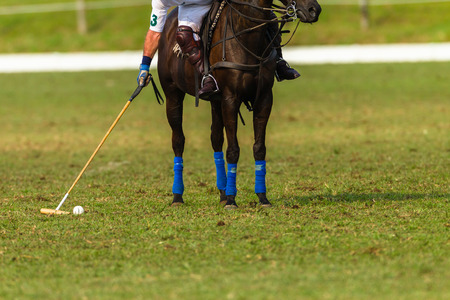 polo player: Polo player pony game action Stock Photo
