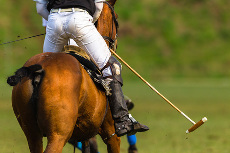 Polo player horse pony game action