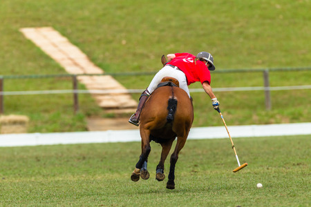 polo player: Polo woman player horse pony game action Editorial