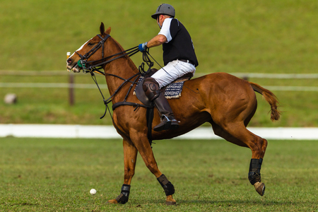 polo player: Polo player horse pony game action
