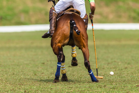 polo player: Polo player horse pony game action closeup abstract. Stock Photo
