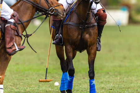 Polo players ponies game action