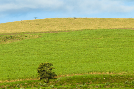 hillside: Hillside farming field crops rural countryside landscape Stock Photo