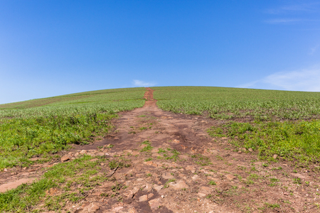 hillside: Hillside farming dirt road over blue sky horizon landscape of crops.