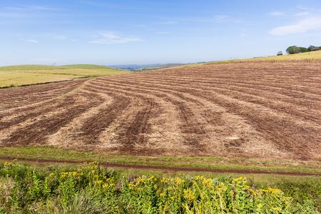 harvests: Farmlands crops harvested field landscape.