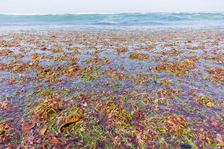 cean marine seaweed plants stripped off reefs from ocean waves natures power.