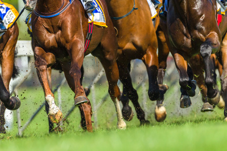Horse racing animals  legs hoofs closeup track action photo