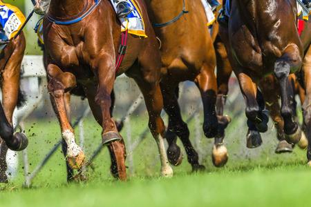 Cavallo da corsa animali gambe zoccoli closeup track action photo