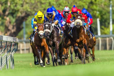 Horse racing animals  jockeys track action photo