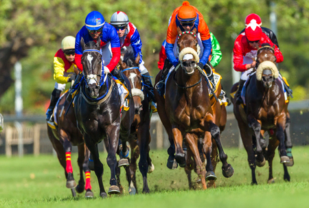 Horse racing animals  jockeys track action