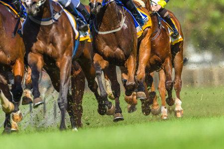 競馬は動物の足の蹄クローズ アップ トラックのアクション 報道画像