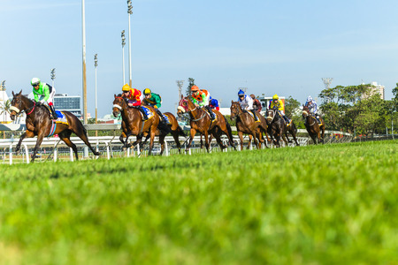 Horse racing animals  jockey's track action photo