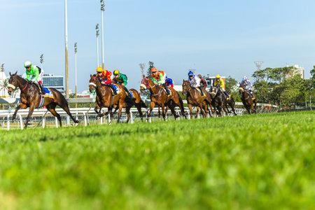 Horse racing animals  jockey's track action photo