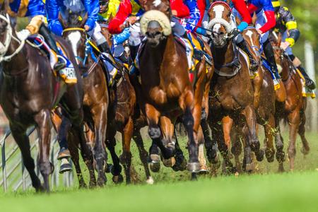 Horse racing animals legs hoofs closeup track action