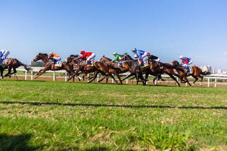 Paardensport dieren jockey's track action