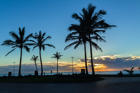 silhoutted: Dawn ocean sunrise along beach promenade with silhoutted palm trees landscape..