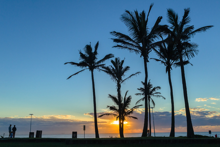 silhoutted: Dawn ocean sunrise along beach promenade with silhoutted palm trees landscape.