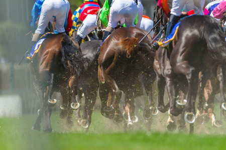Race horses racing pounding grass track rear photo of legs hoofs metal shoes of animals.
