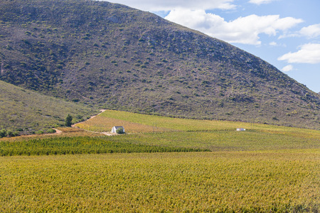 Rural wine farm vineyards against mountain backdrop with small halfway house rest for workers on scenic landscape. Stock Photo