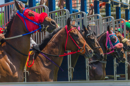 Race horses exiting track starting gates