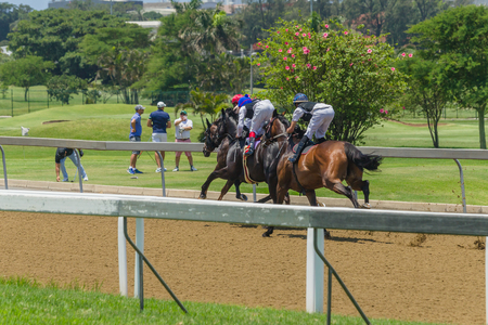 Race horses running track past golfers track. Stock Photo
