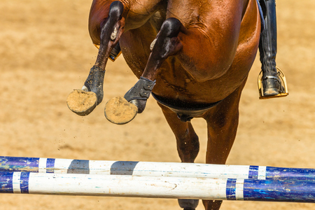 Equestrian Show jumping horse closeup rear photo of animals feet shoes flight over gate poles outdoor arena abstract action.